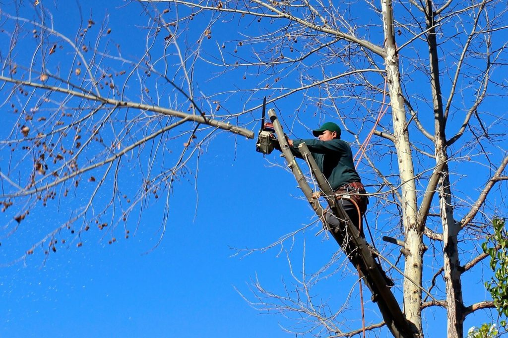 Contact Us-Sunny Isles Beach FL Tree Trimming and Stump Grinding Services-We Offer Tree Trimming Services, Tree Removal, Tree Pruning, Tree Cutting, Residential and Commercial Tree Trimming Services, Storm Damage, Emergency Tree Removal, Land Clearing, Tree Companies, Tree Care Service, Stump Grinding, and we're the Best Tree Trimming Company Near You Guaranteed!