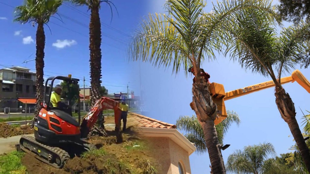 Palm tree trimming & palm tree removal-Sunny Isles Beach FL Tree Trimming and Stump Grinding Services-We Offer Tree Trimming Services, Tree Removal, Tree Pruning, Tree Cutting, Residential and Commercial Tree Trimming Services, Storm Damage, Emergency Tree Removal, Land Clearing, Tree Companies, Tree Care Service, Stump Grinding, and we're the Best Tree Trimming Company Near You Guaranteed!