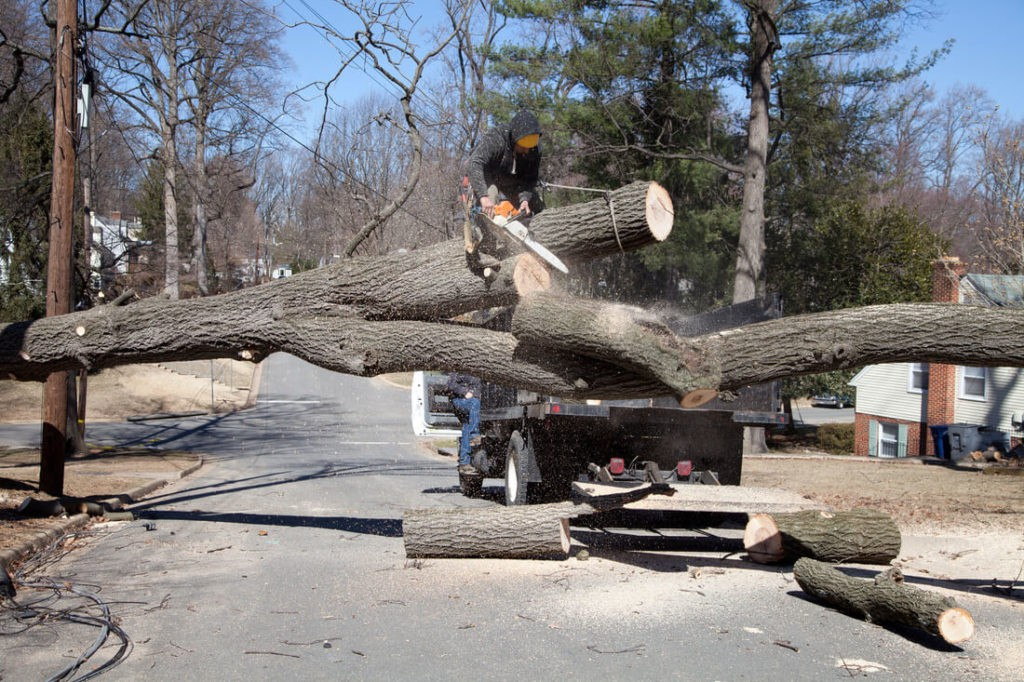 Residential Tree Services-Sunny Isles Beach FL Tree Trimming and Stump Grinding Services-We Offer Tree Trimming Services, Tree Removal, Tree Pruning, Tree Cutting, Residential and Commercial Tree Trimming Services, Storm Damage, Emergency Tree Removal, Land Clearing, Tree Companies, Tree Care Service, Stump Grinding, and we're the Best Tree Trimming Company Near You Guaranteed!