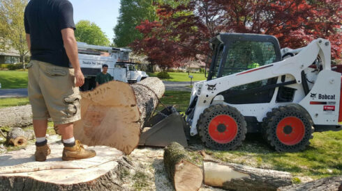 Services-Sunny Isles Beach FL Tree Trimming and Stump Grinding Services-We Offer Tree Trimming Services, Tree Removal, Tree Pruning, Tree Cutting, Residential and Commercial Tree Trimming Services, Storm Damage, Emergency Tree Removal, Land Clearing, Tree Companies, Tree Care Service, Stump Grinding, and we're the Best Tree Trimming Company Near You Guaranteed!