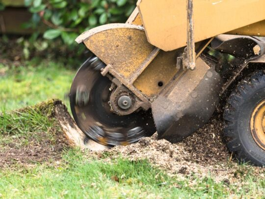 Stump Grinding-Sunny Isles Beach FL Tree Trimming and Stump Grinding Services-We Offer Tree Trimming Services, Tree Removal, Tree Pruning, Tree Cutting, Residential and Commercial Tree Trimming Services, Storm Damage, Emergency Tree Removal, Land Clearing, Tree Companies, Tree Care Service, Stump Grinding, and we're the Best Tree Trimming Company Near You Guaranteed!