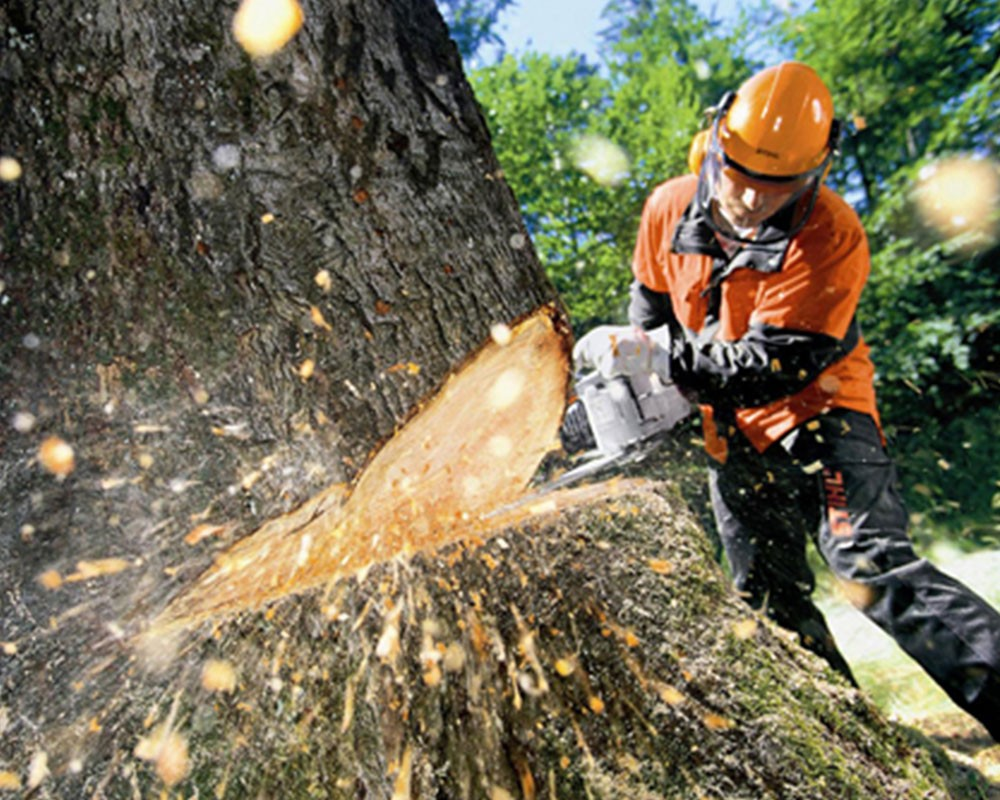 Tree Cutting-Sunny Isles Beach FL Tree Trimming and Stump Grinding Services-We Offer Tree Trimming Services, Tree Removal, Tree Pruning, Tree Cutting, Residential and Commercial Tree Trimming Services, Storm Damage, Emergency Tree Removal, Land Clearing, Tree Companies, Tree Care Service, Stump Grinding, and we're the Best Tree Trimming Company Near You Guaranteed!