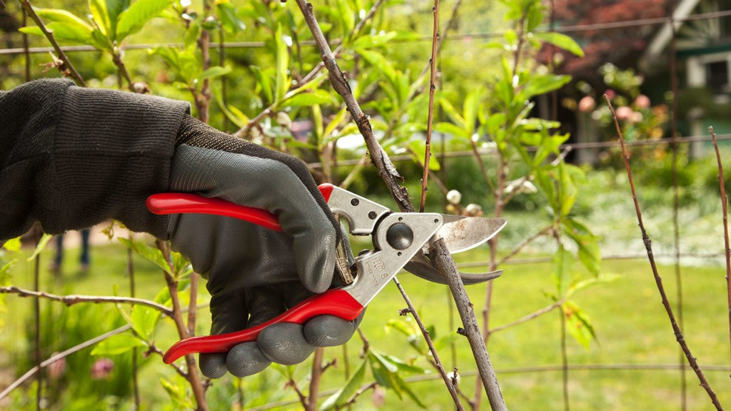 Tree Pruning-Sunny Isles Beach FL Tree Trimming and Stump Grinding Services-We Offer Tree Trimming Services, Tree Removal, Tree Pruning, Tree Cutting, Residential and Commercial Tree Trimming Services, Storm Damage, Emergency Tree Removal, Land Clearing, Tree Companies, Tree Care Service, Stump Grinding, and we're the Best Tree Trimming Company Near You Guaranteed!