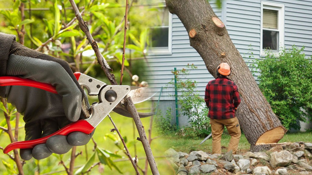 Tree pruning & tree removal-Sunny Isles Beach FL Tree Trimming and Stump Grinding Services-We Offer Tree Trimming Services, Tree Removal, Tree Pruning, Tree Cutting, Residential and Commercial Tree Trimming Services, Storm Damage, Emergency Tree Removal, Land Clearing, Tree Companies, Tree Care Service, Stump Grinding, and we're the Best Tree Trimming Company Near You Guaranteed!